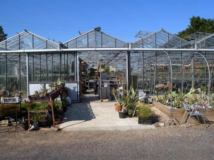 Cactus Shop Entrance
